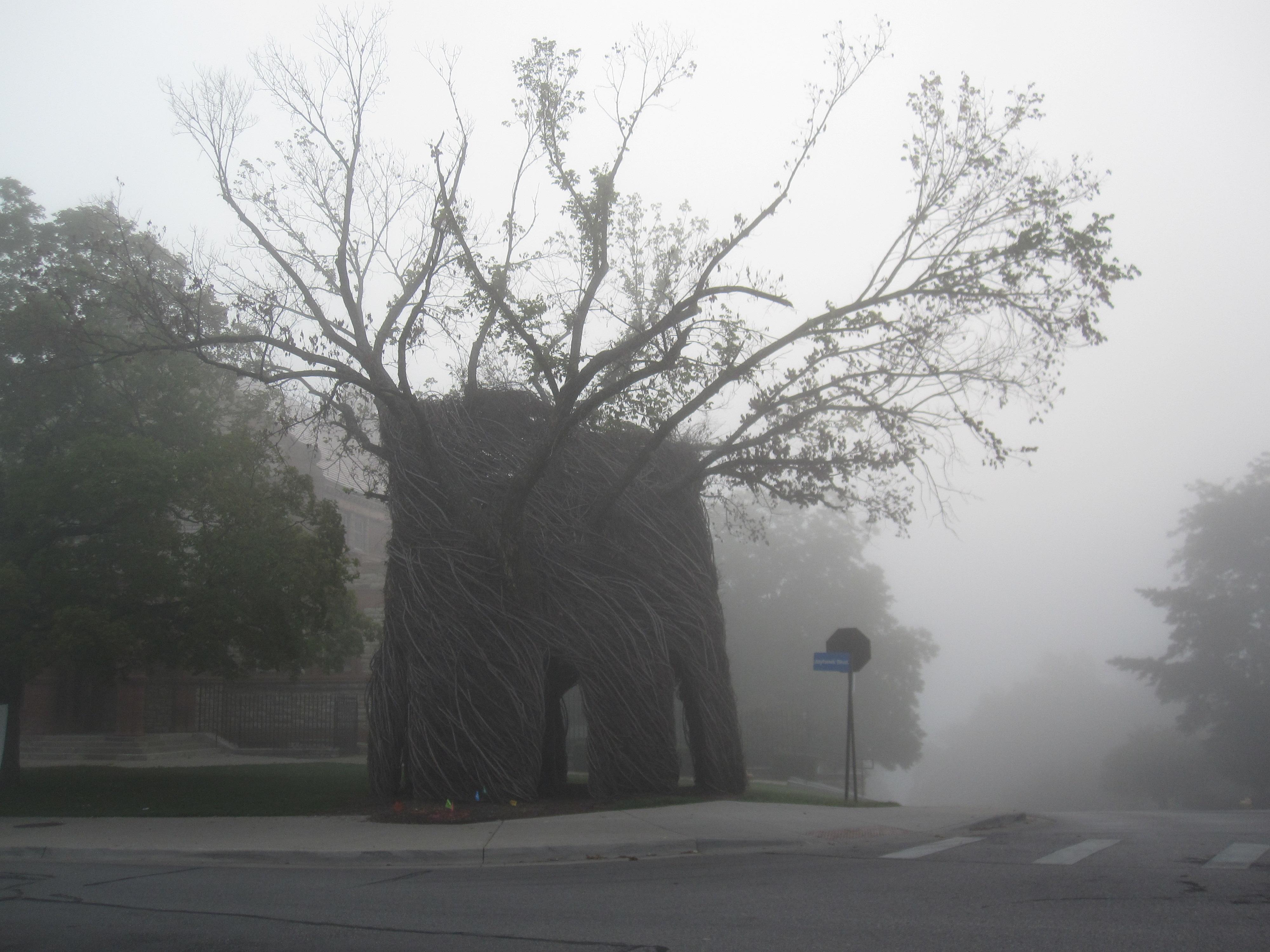 KU Fog Walk - 0